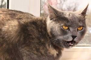 cat-flehming