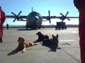 aircruft_dogs