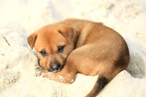 Puppy_on_Halong_Bay