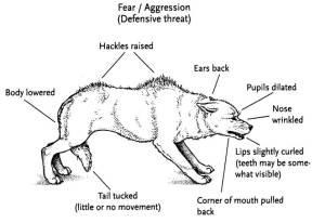 fearaggression